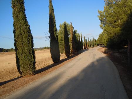 Camino-de-Santiago-2013-8661